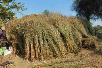Choking point: India's environmental crisis
